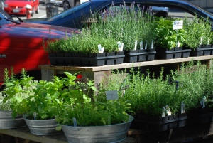 Maybe a small Herb Garden would fit you?